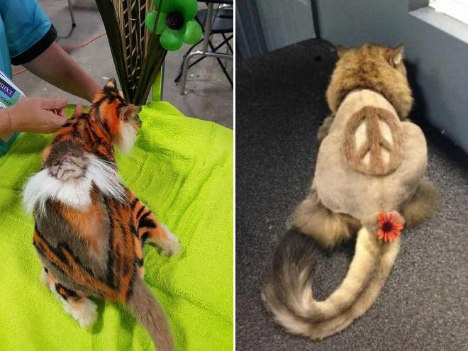 коты у парикмахера