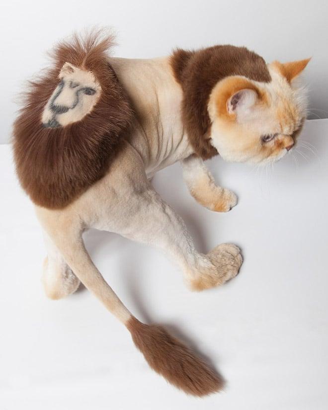 кот со странной стрижкой