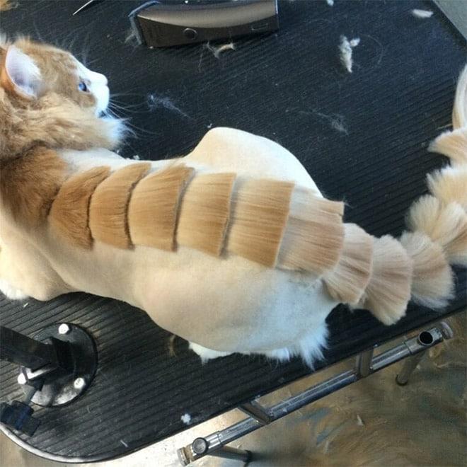 кот с необычной стрижкой
