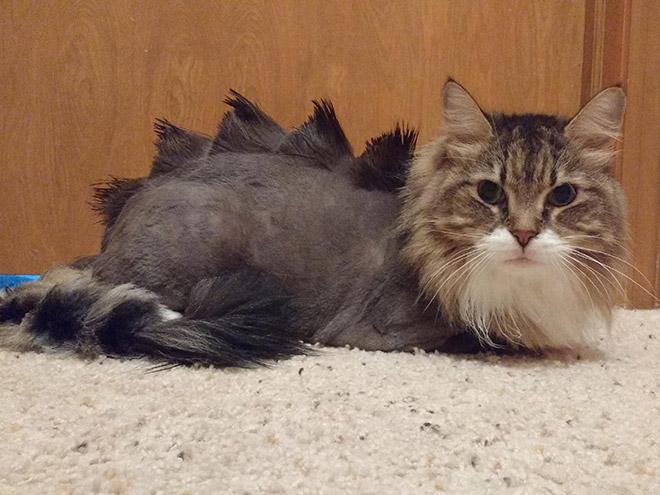 кот с модной стрижкой