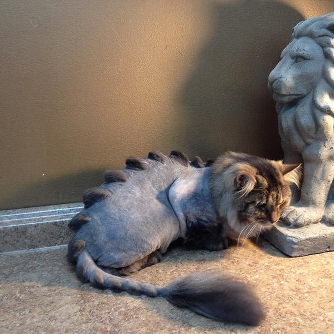 необычный кот