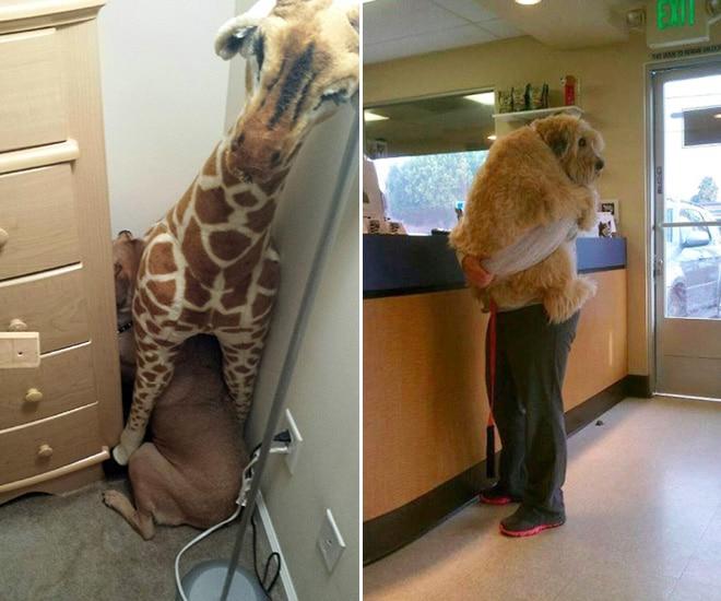 собаки у ветеринара