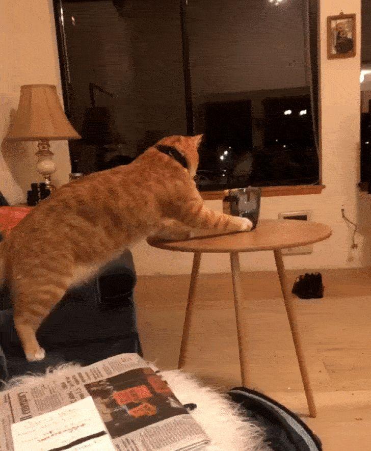 рыжий кот столкнул стакан со стола