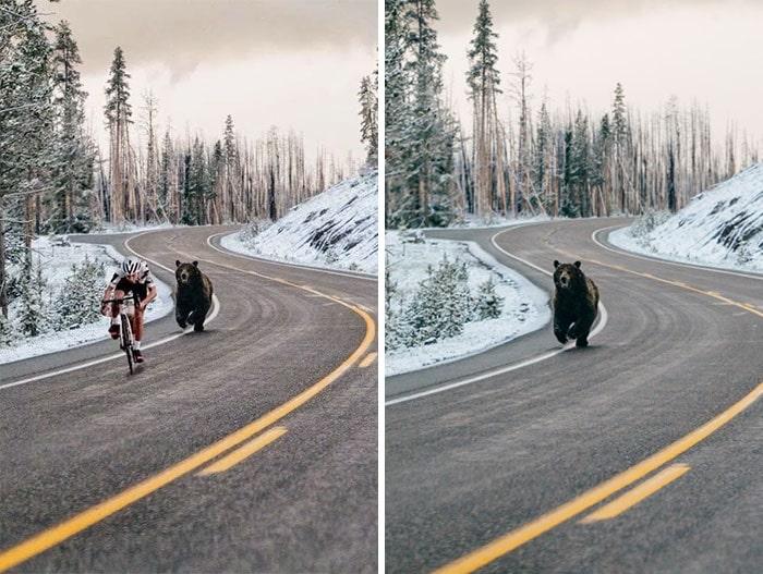 медведь бежит по дороге за велосипедистом