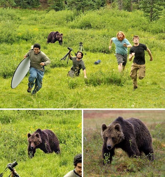 медведь бежит за фотографами
