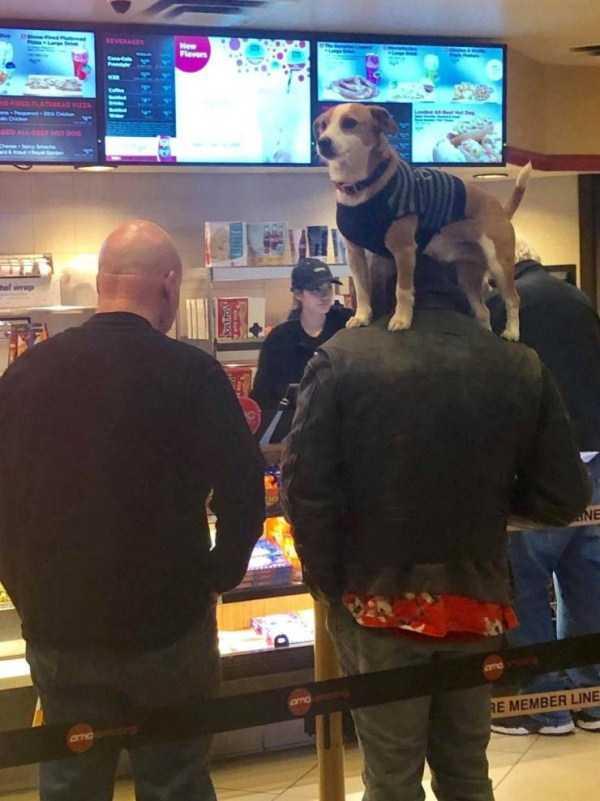 собака стоит на плечах у мужчины