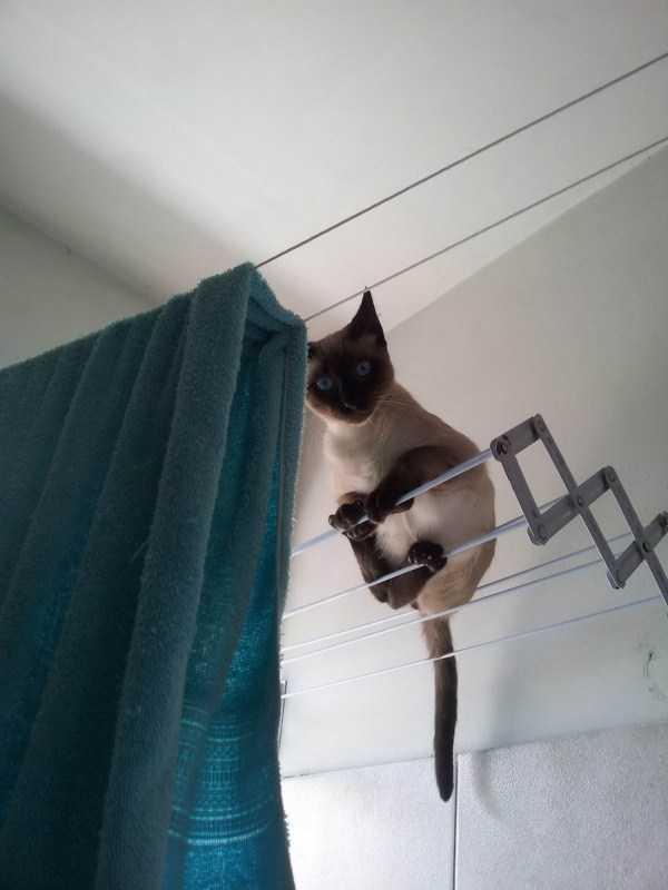 кошка сидит на сушке для белья