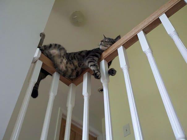 полосатый кот спит на лестнице