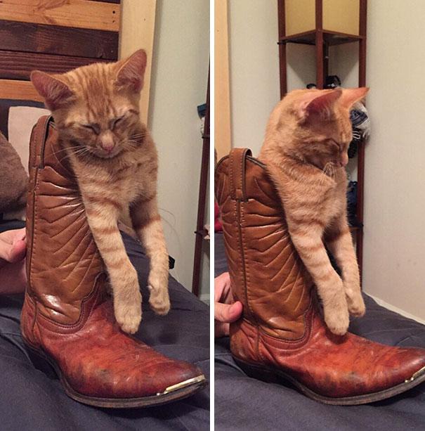 рыжий кот спит в сапоге