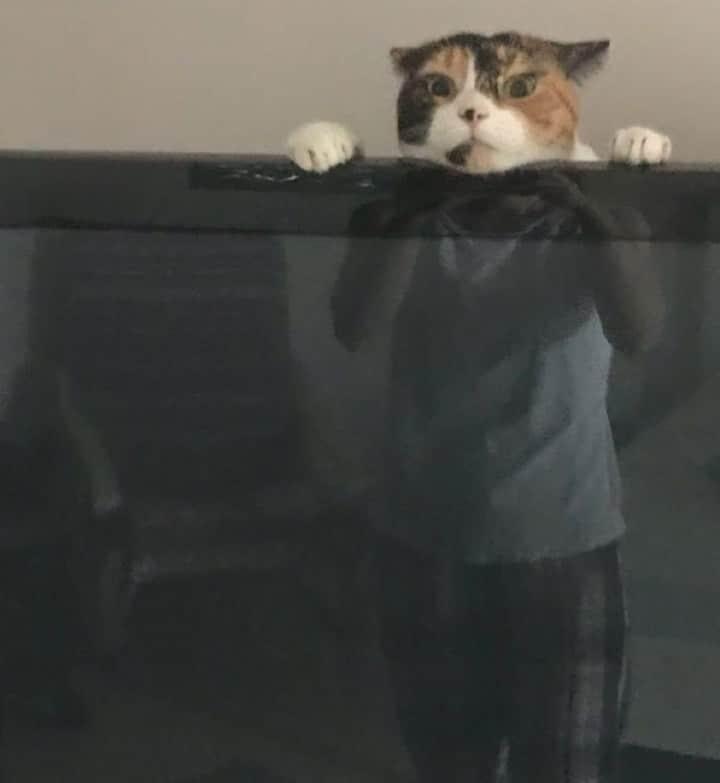 кот и отражение в телевизоре