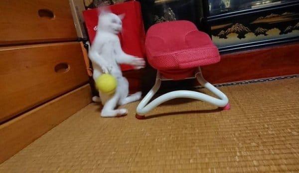 белый кот стоит на задних лапах