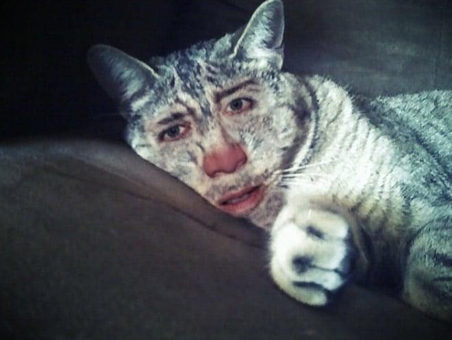 полосатый кот с лицом кейджа