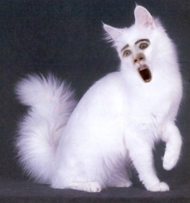 белый пушистый кот с лицом николаса кейджа
