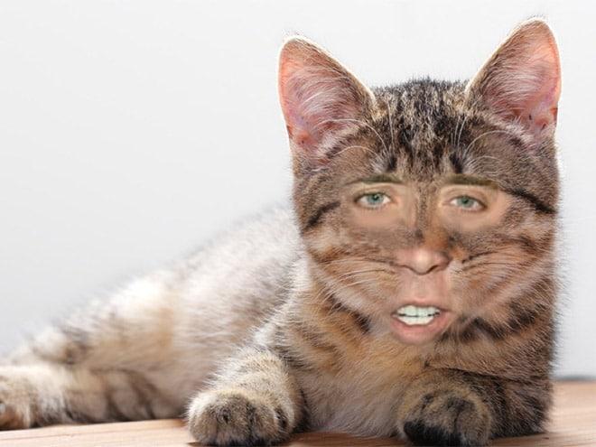 полосатый кот с лицом николаса кейджа