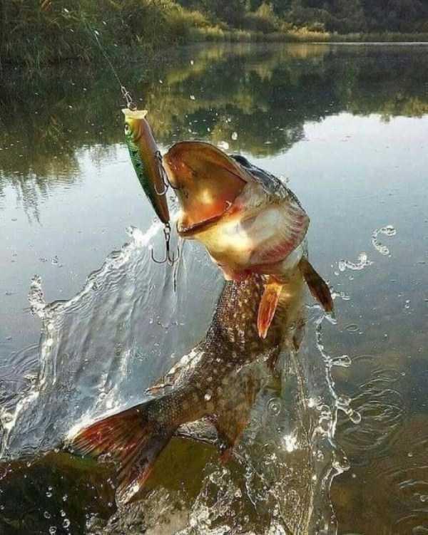 рыба клюет