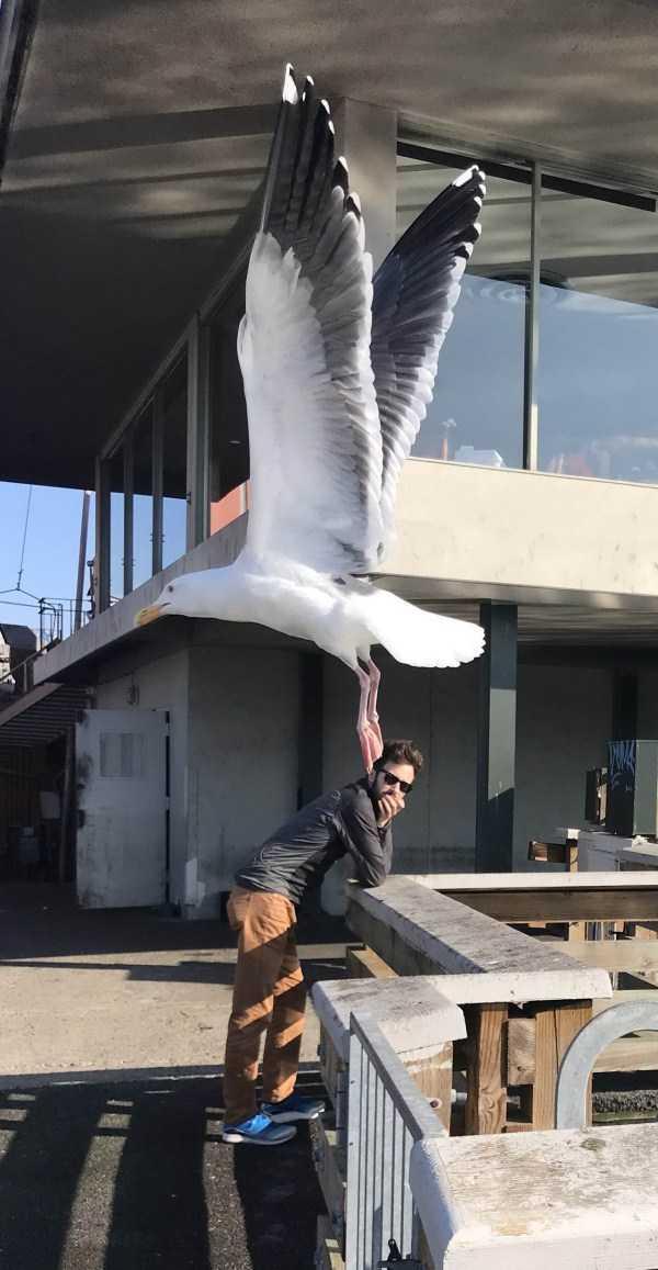чайка и парень