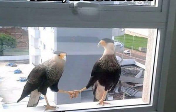птицы жмут друг другу лапу