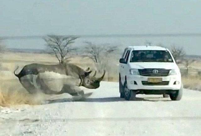 носорог атакует машину