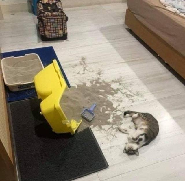 кот и перевернутый лоток с песком