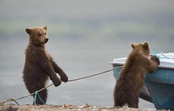 медвежата возле лодки