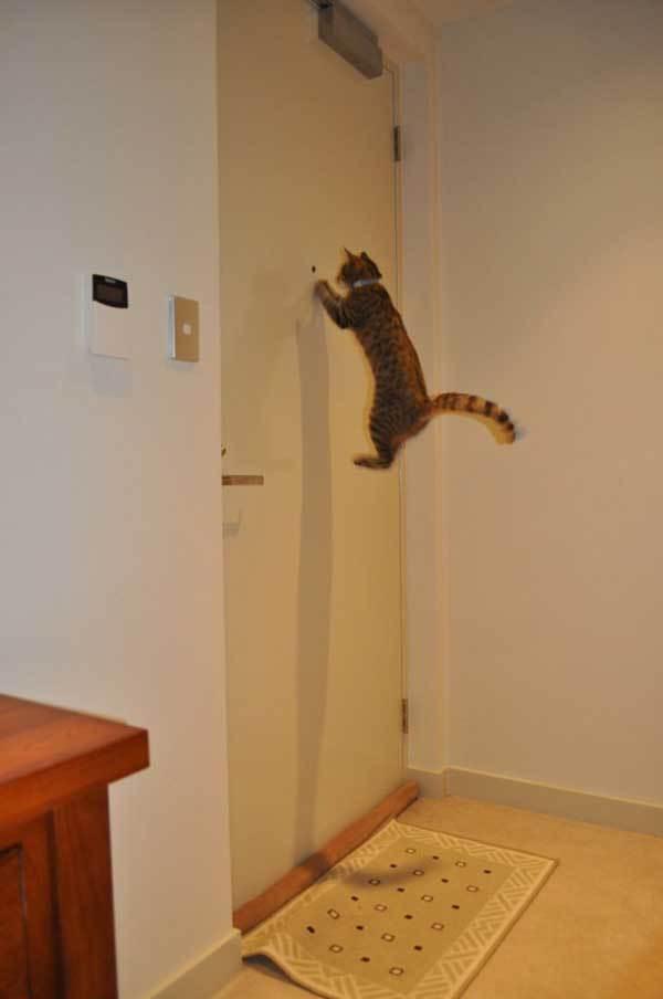 кот смотрит в дверной глазок