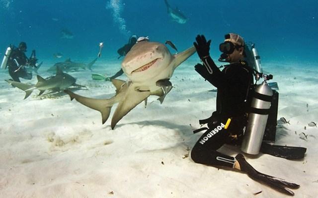 аквалангист и акула