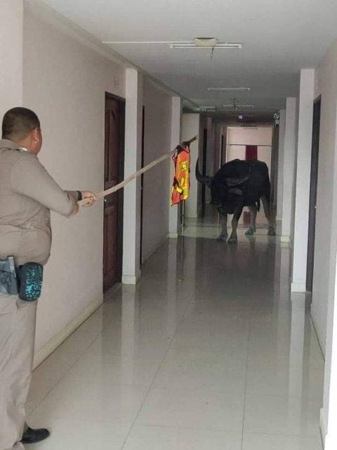 бык и полицейский