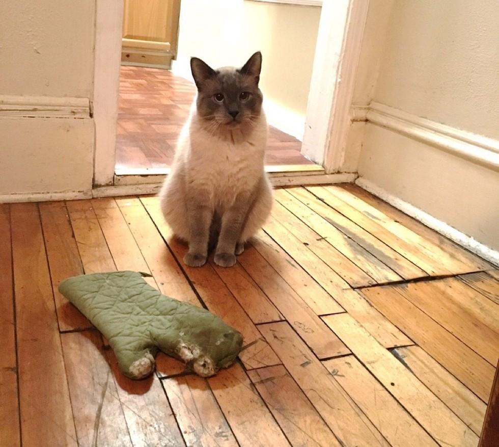 кошка и прихватка