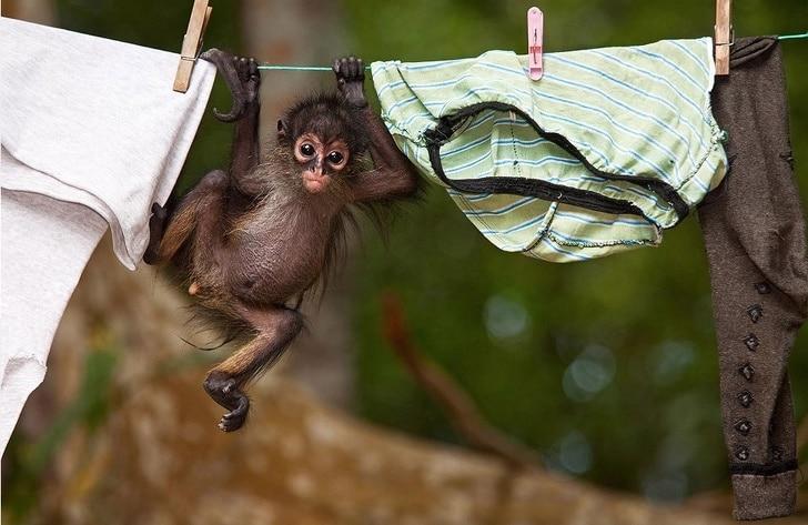 обезьянка висит на веревке с бельем