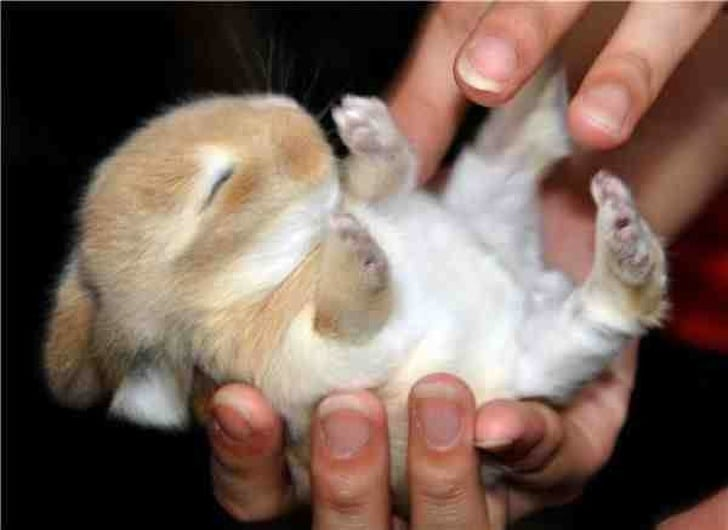крольченок в руках