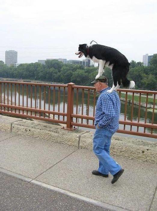 хозяин несет собаку