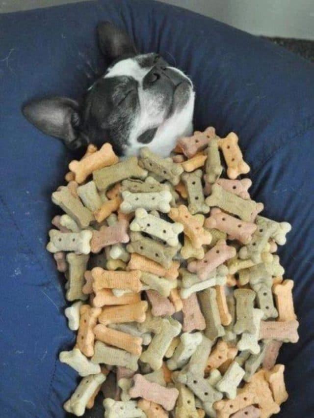 собака спит с едой