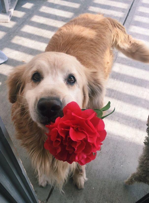 собака и цветы