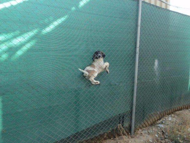 пес застрял в сетке