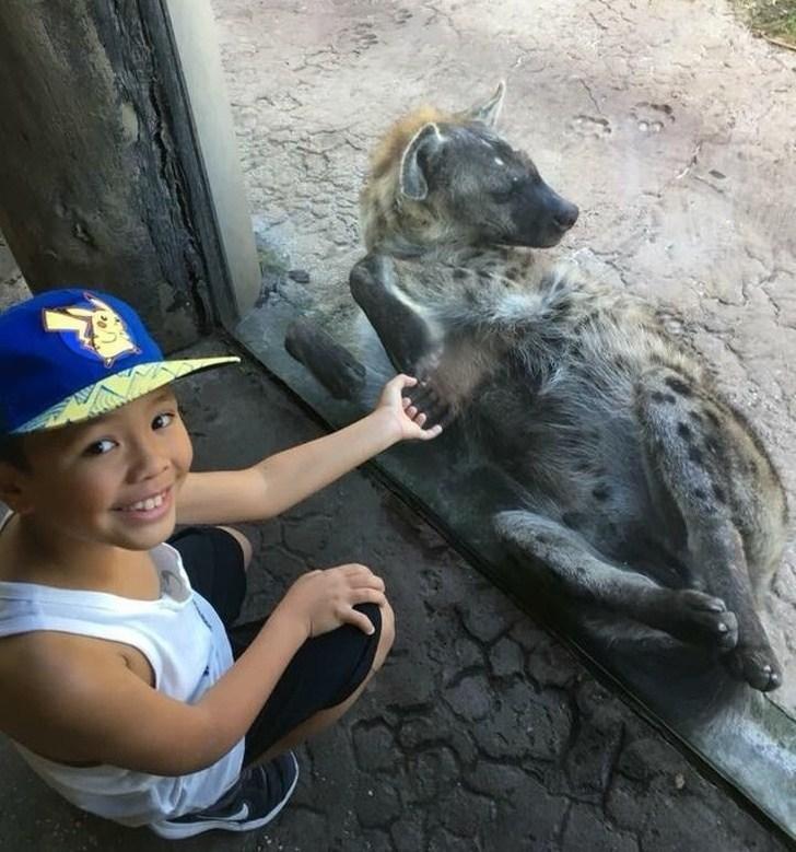 мальчик и гиена