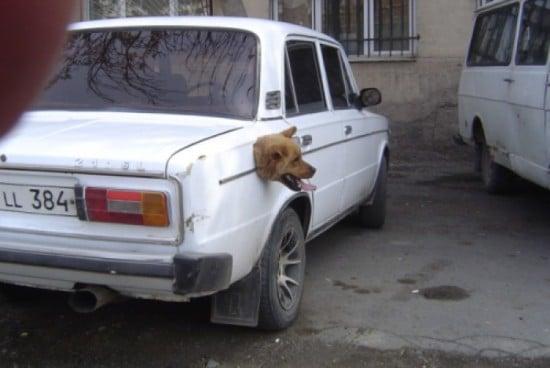 пес и машина