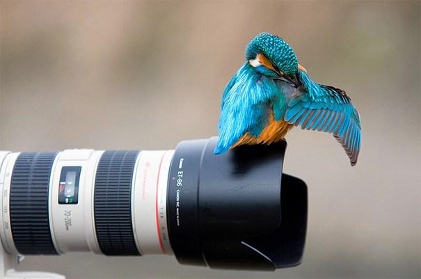 птица сидит на объективе