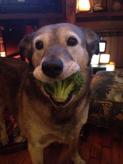 пес и брокколи