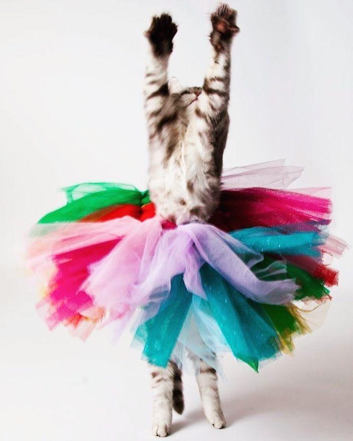 кошка в разноцветной юбке