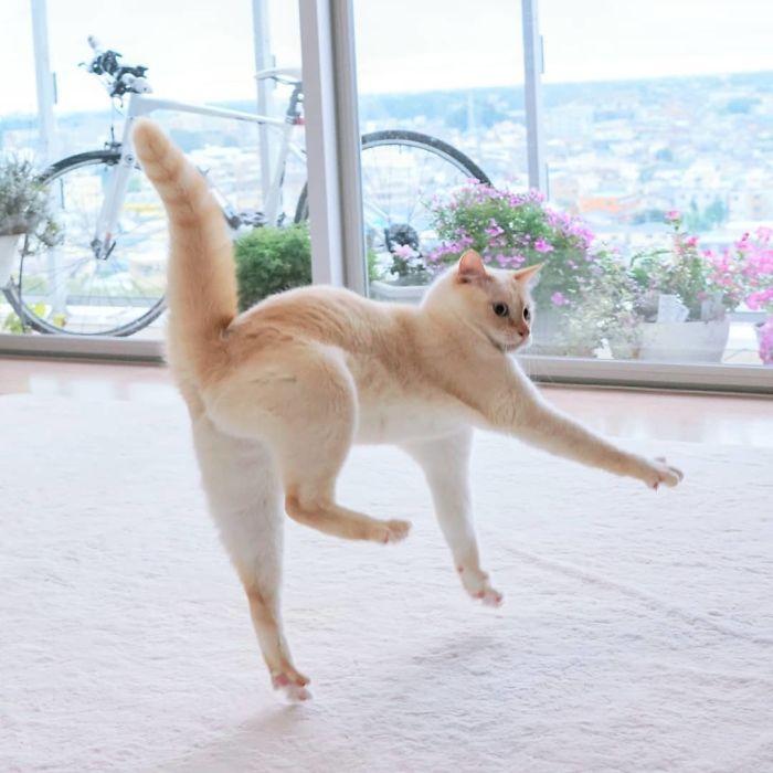 кошка на белом ковре