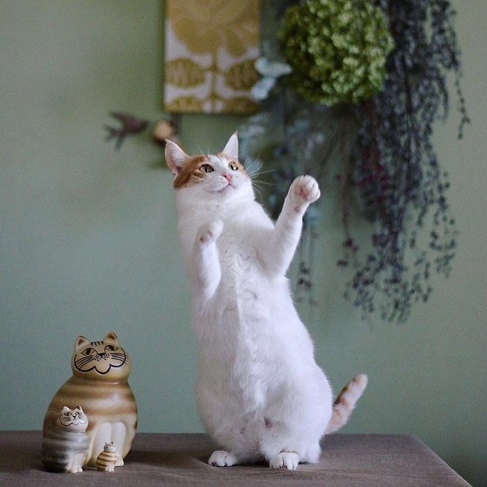 кошка стоит на задних лапах рис 2