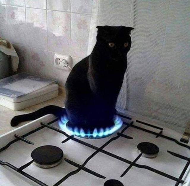 кот на огне