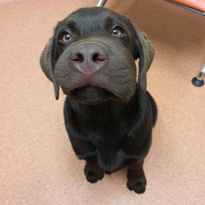 собака с больным носом