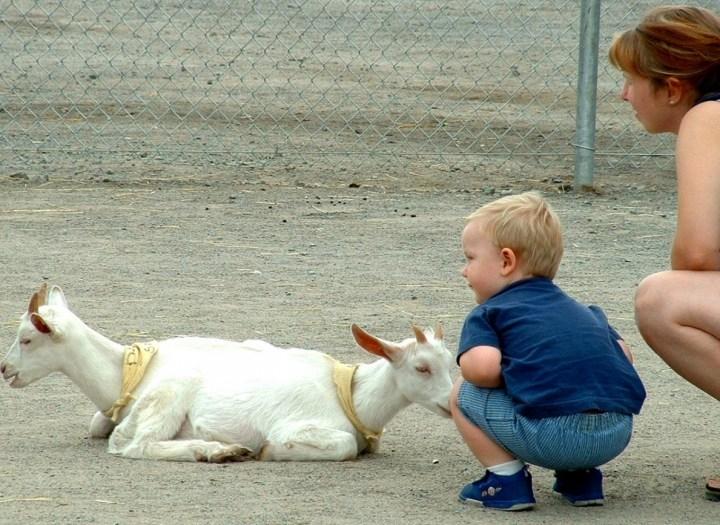 козы и ребенок