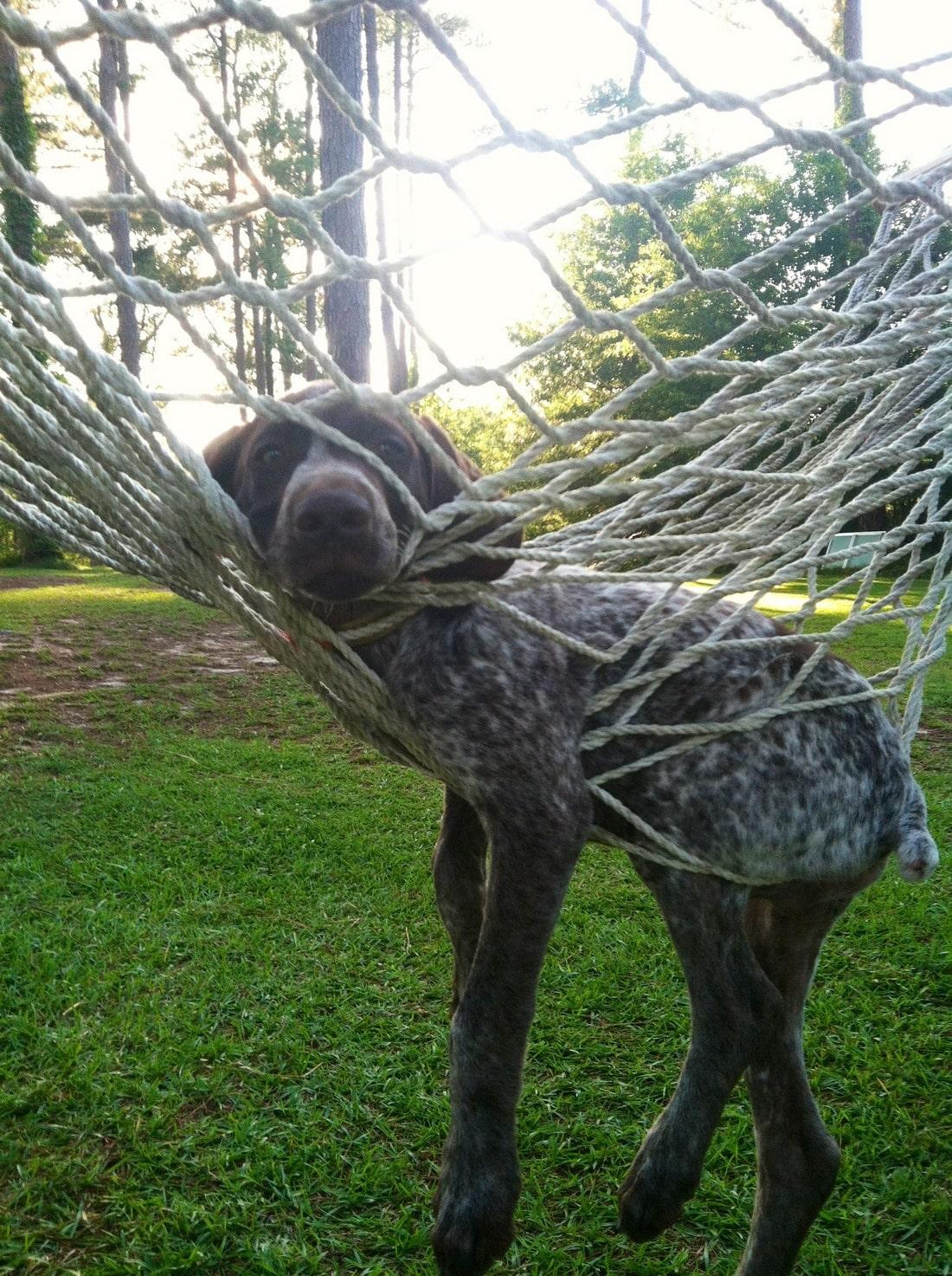 пес в гамаке