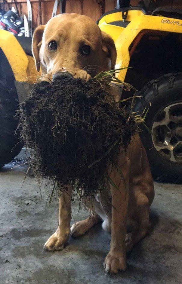пес и кусок газона