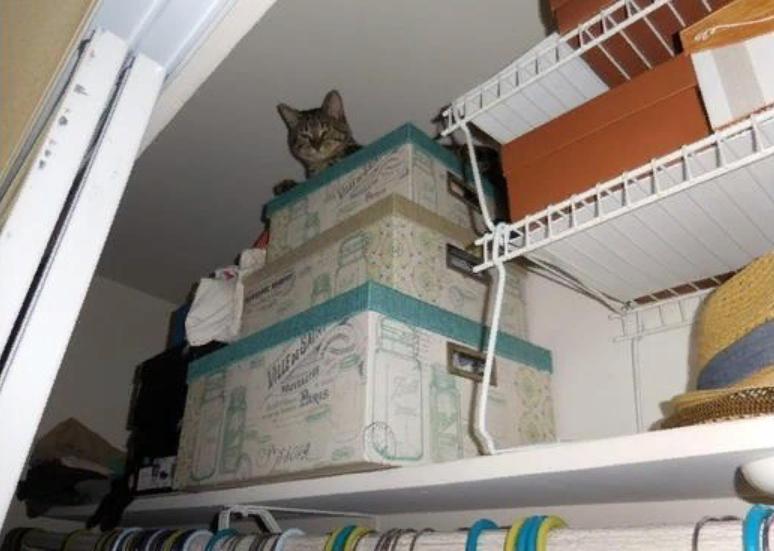 кот сидит в шкафу