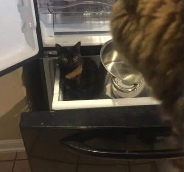 кот в шкафу