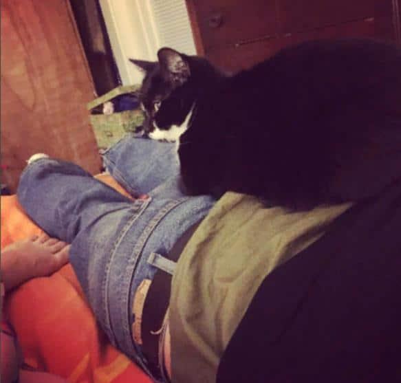 кот лежит на хозяине