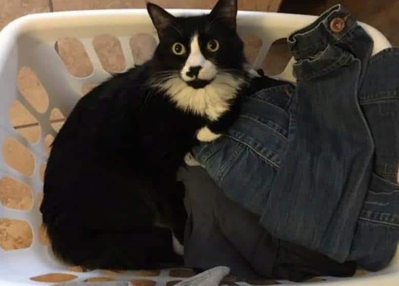 кот лежит с грязной одеждой